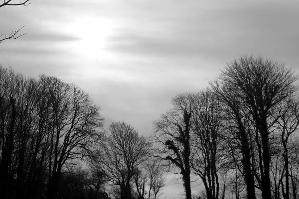 paris contre-jour arbre ciel nuage noir-blanc