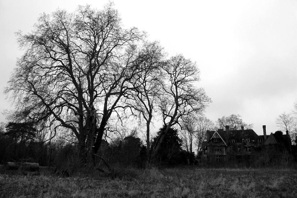 ailleurs arbre noir-blanc château