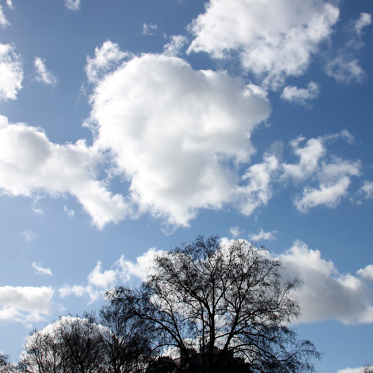 paris contre-jour arbre ciel nuage