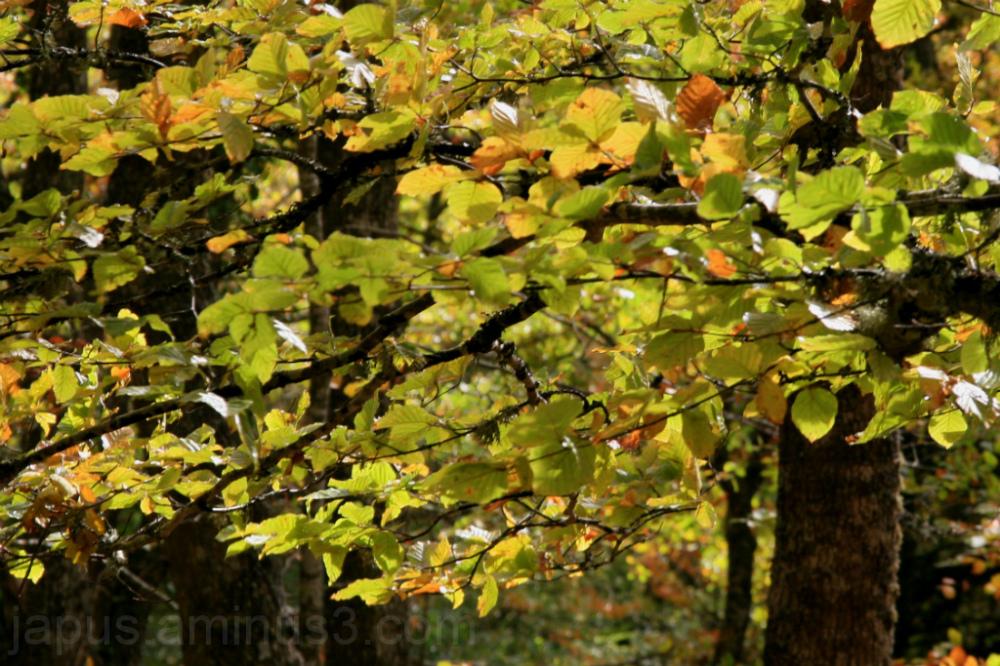 Hojas en el otoño.