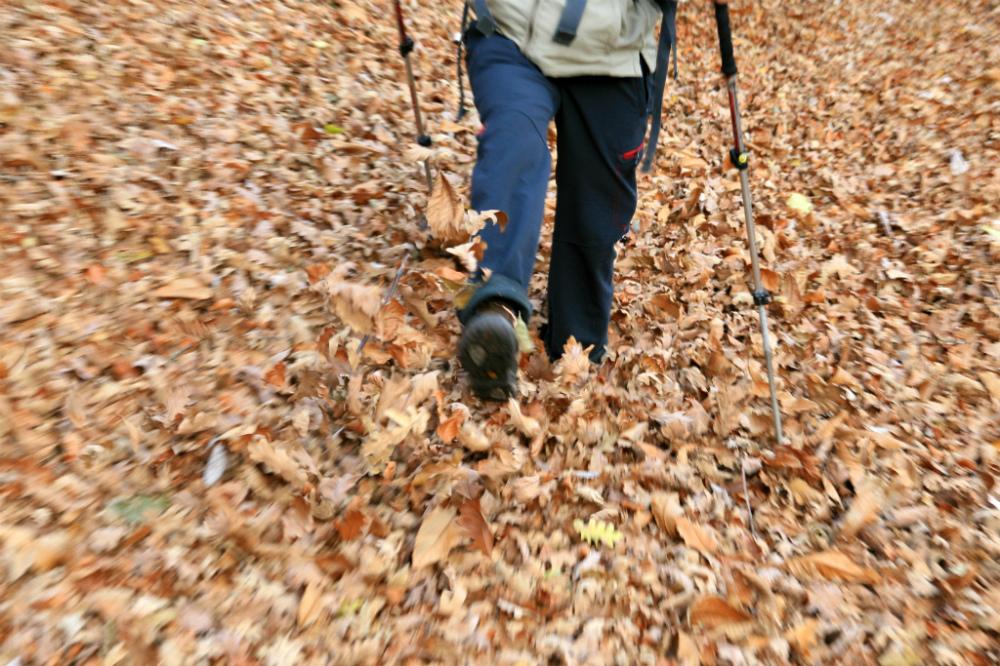Manto de hojas secas
