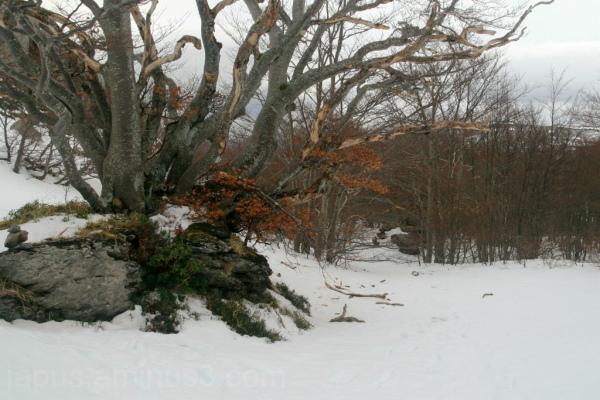 Por el bosque nevado