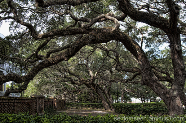 Live Oak Arch