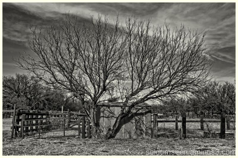 Li'L Boquillas Ranch