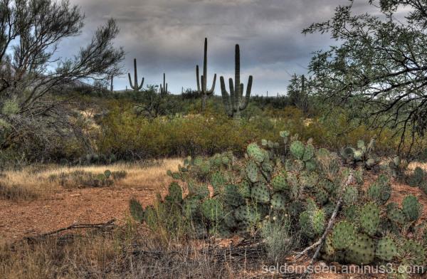 A Sonoran Desert Portrait