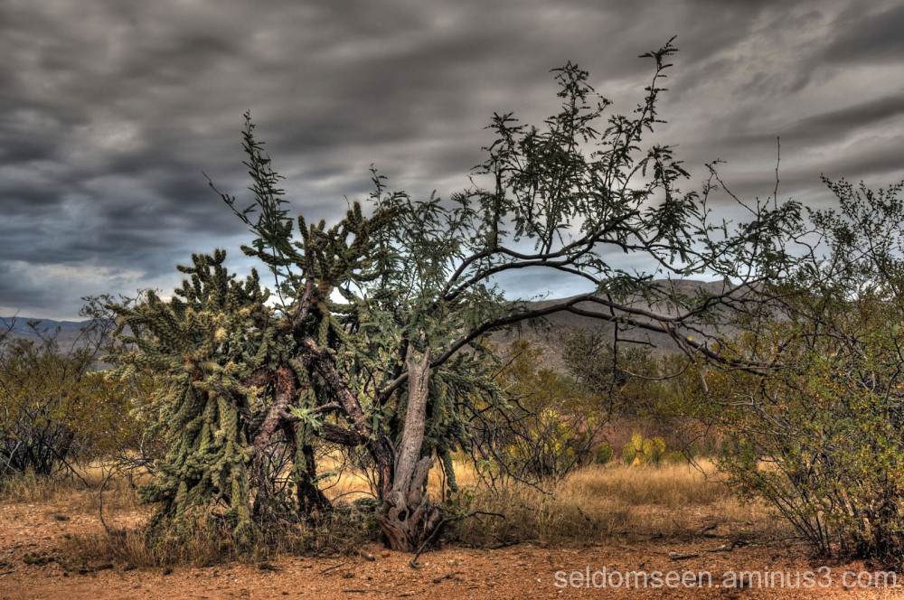 A Sonoran Desert Portrait II