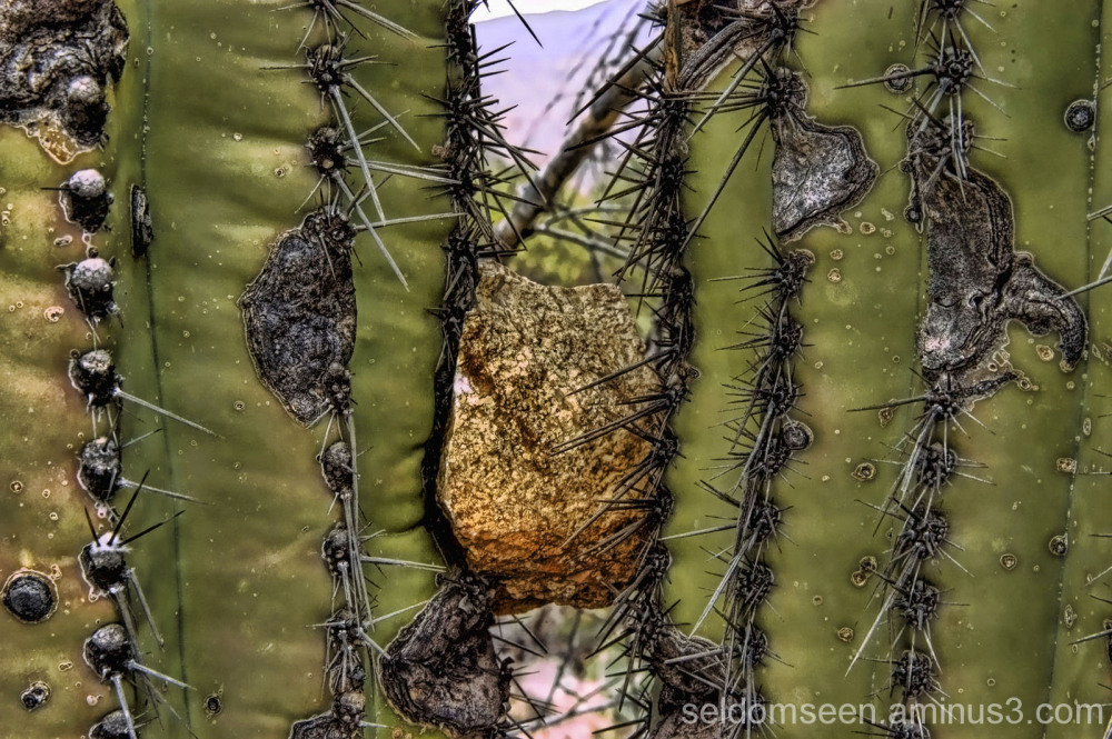 Between a Cactus and a Hard Place