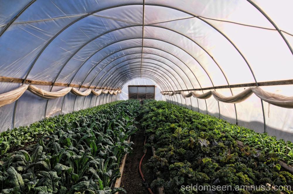 Sunizona Family Farm