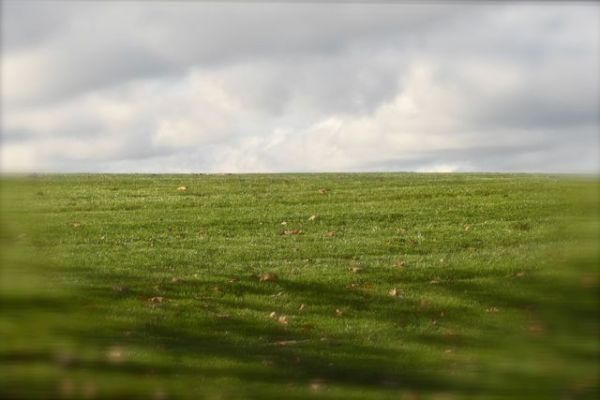 Green Grass & Blue Sky