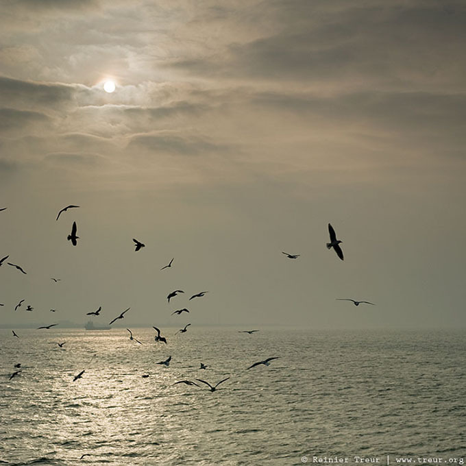a flock of seagulls, ferry texel to den helder