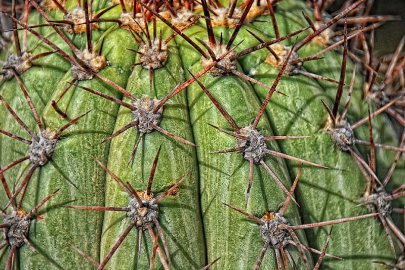 Cactus del Jardín Botánico de Barcelona