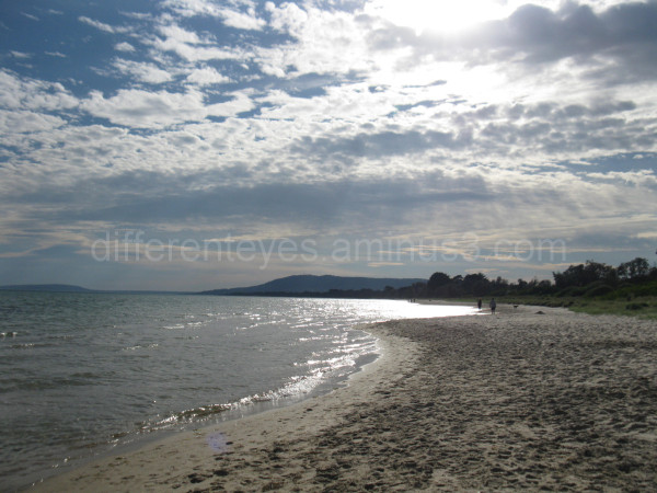 morning light on the beach