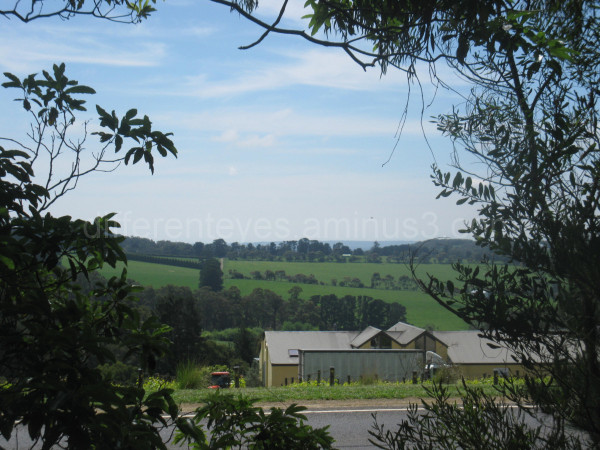 Rolling green hills round a Red Hill winery