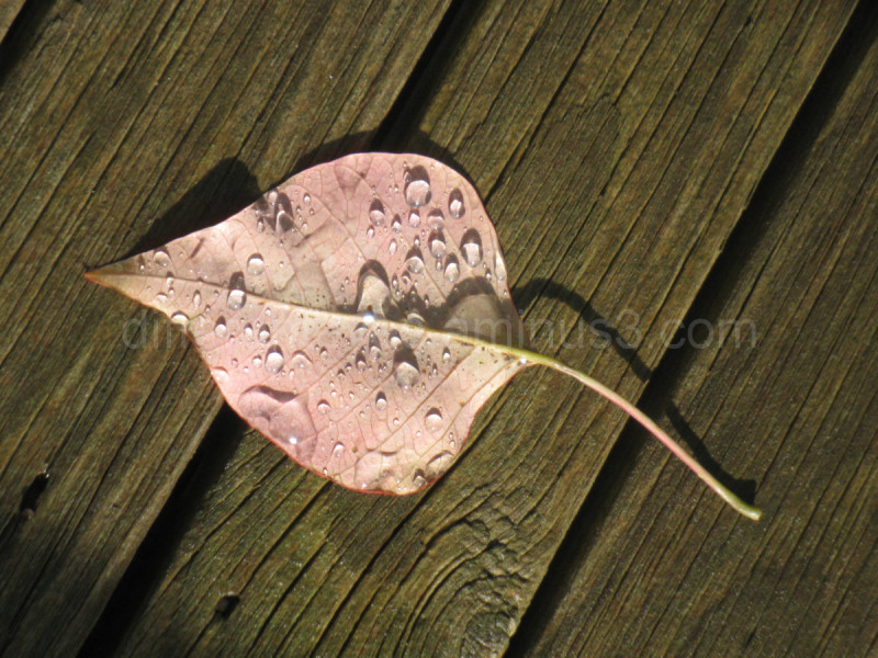 Macro leaf after rain