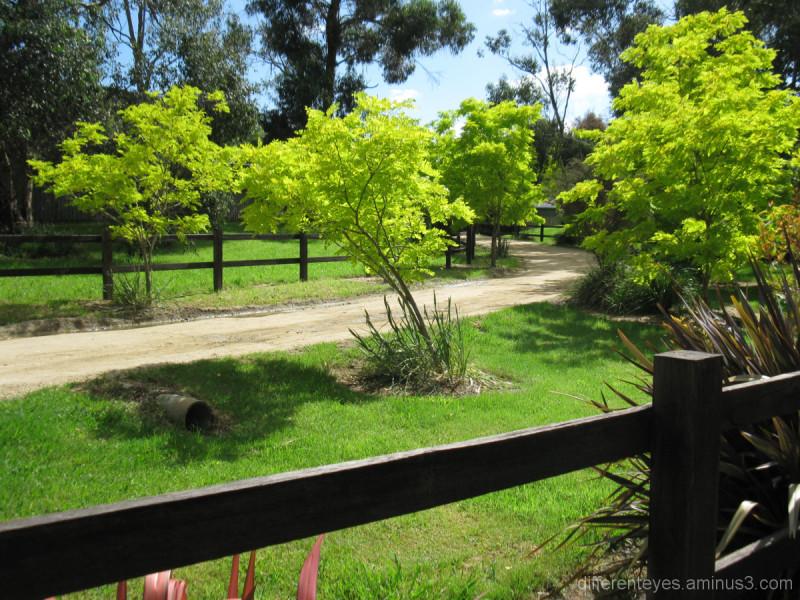 Leafy Balnarring driveway in Spring sunligt