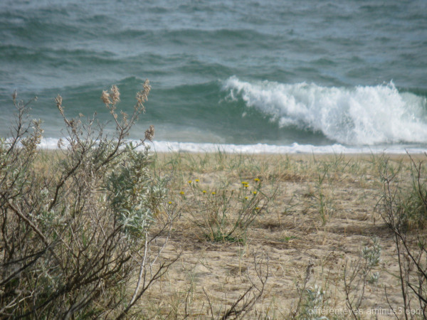 Wave rolling in to Dromana beach