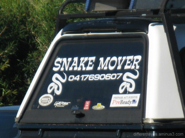 Sign for snake removal on car