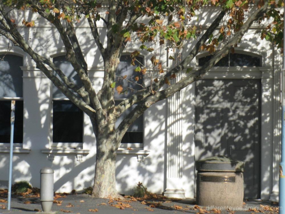 Mornington street shadows