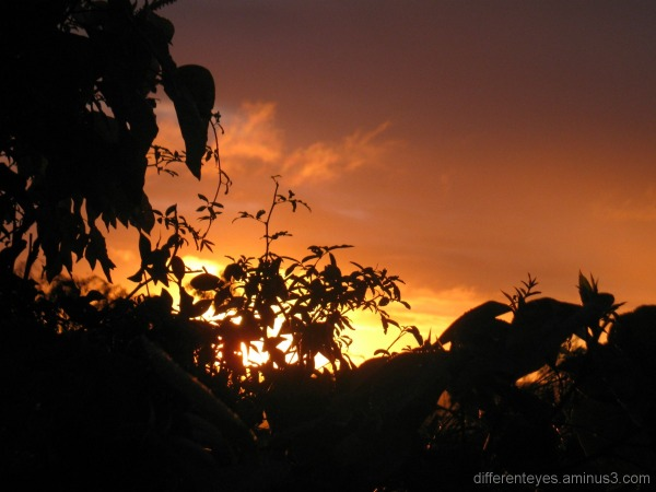Sunrise and leaf silhouettes