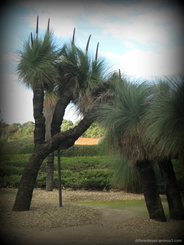 Cranbourne Botanical Gardens' garden art