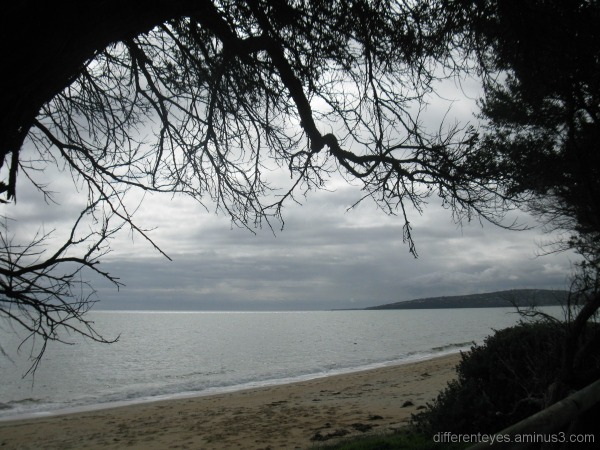 View of Port Phillip Bay through trees