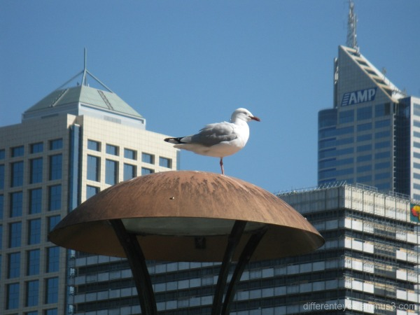 Seagull's view of Melbourne skyline