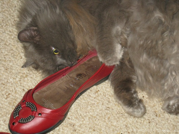 Shadow my cat loves shoes