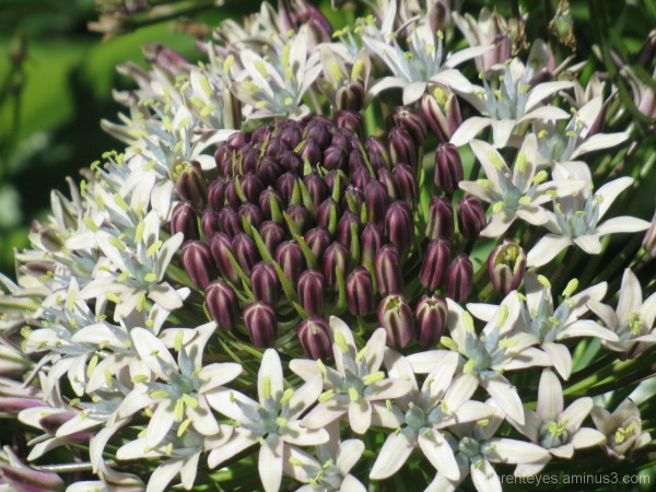 Macro flower at The Briars, Mount Martha