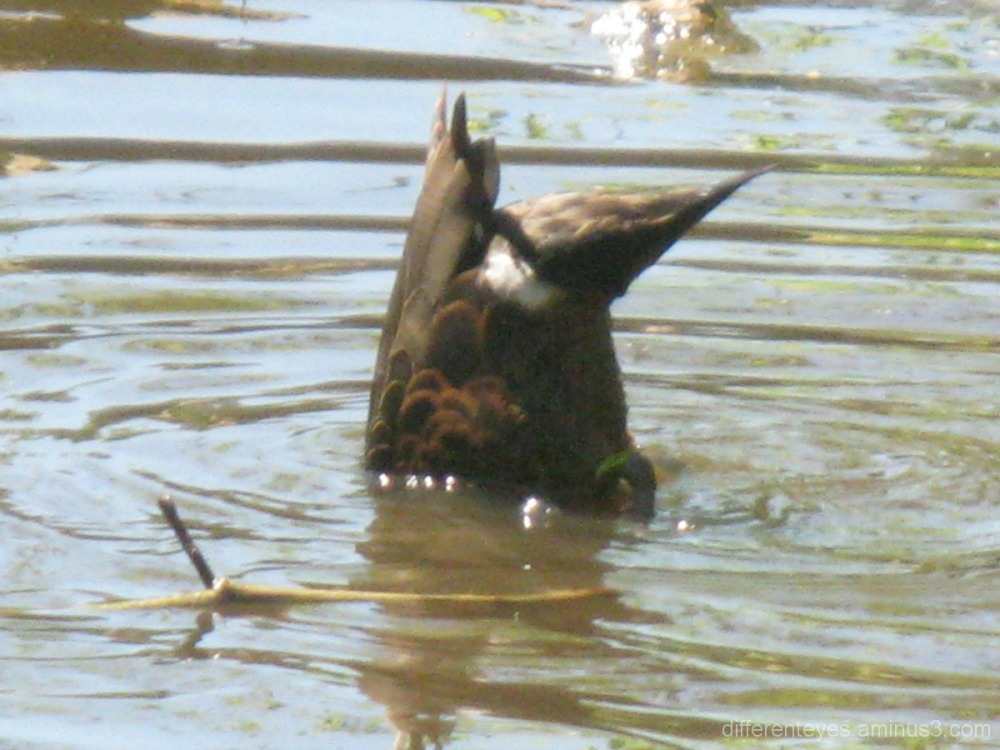 Duck diving at Seawinds, Mornington Peninsula