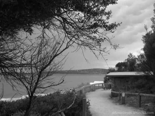 Dromana beach coastal walkway