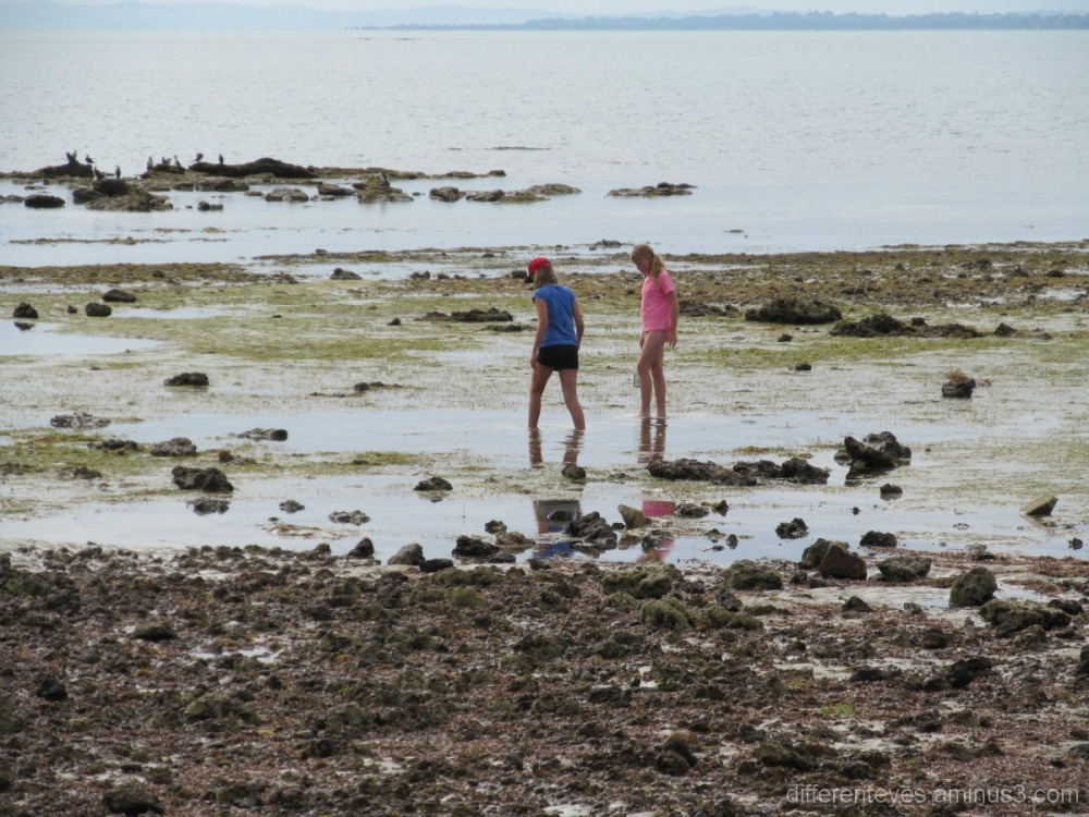 Exploring Balnarring beach rock pools