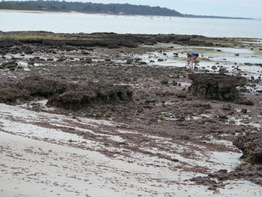 Mudflats at Blanarring beach
