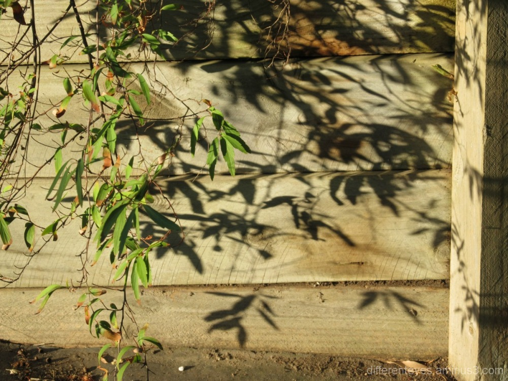 summer morning shadows from leaves