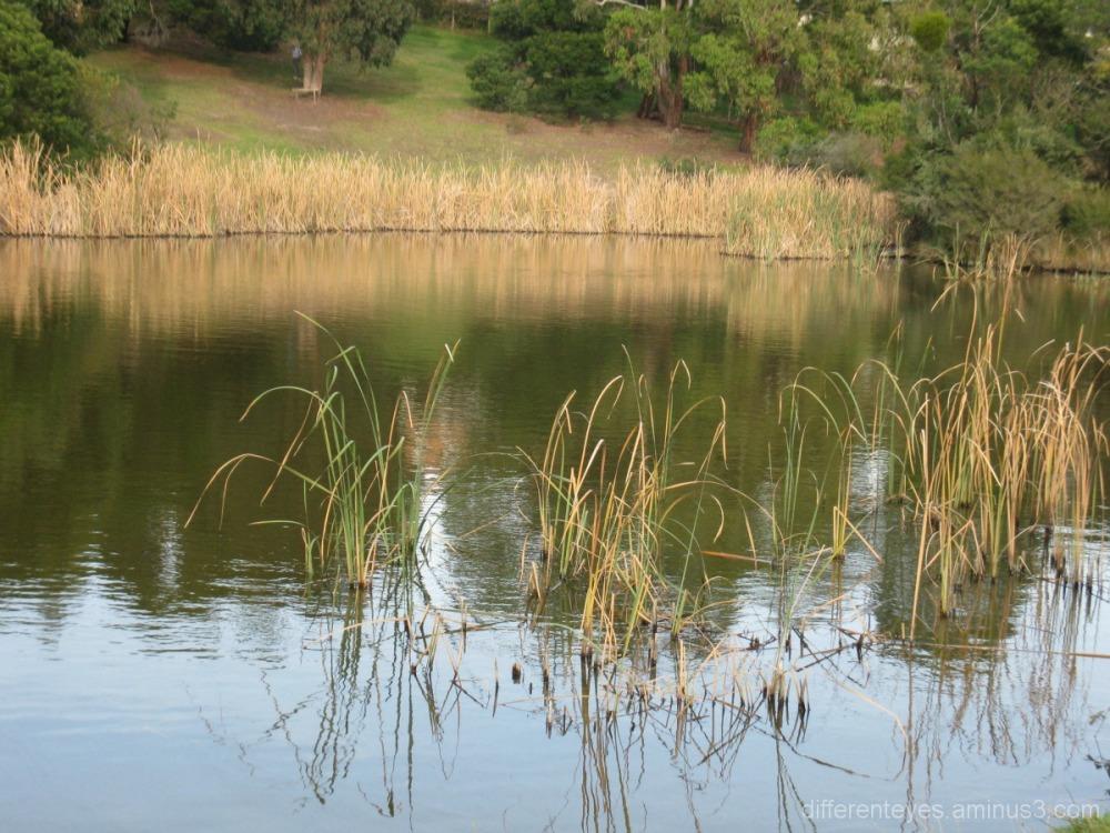 Dromana wetlands in Hillview Community Reserve