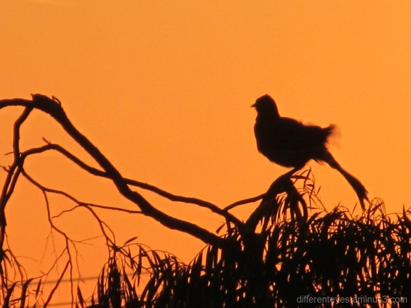 Bird silhouette in dawn light