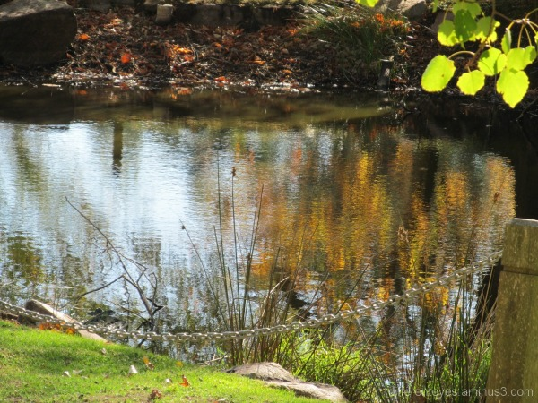 Autumn reflections at Seawinds