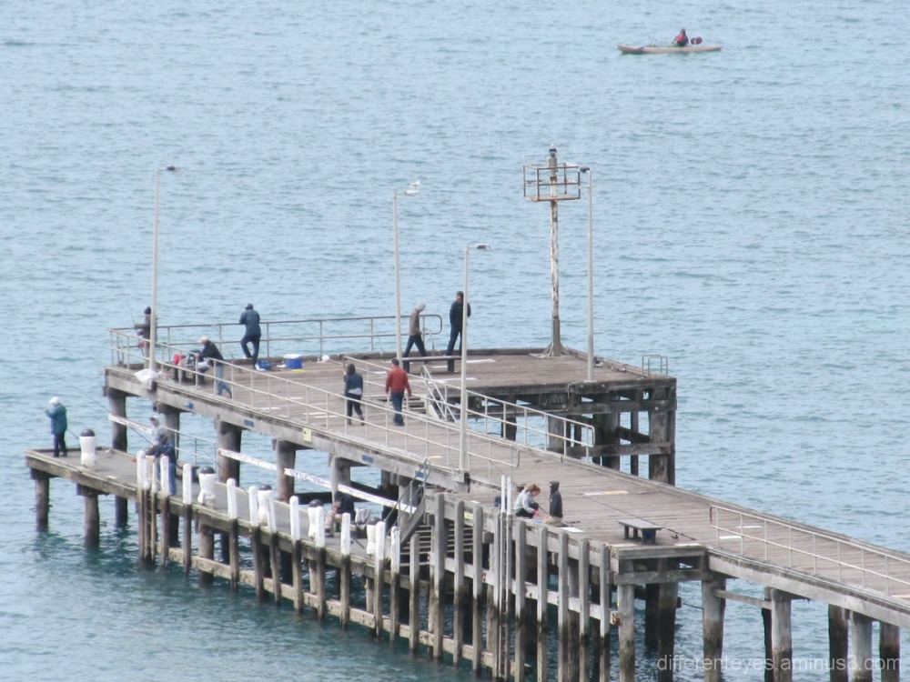 Clifftop view of Flinders pier on Westernport Bay