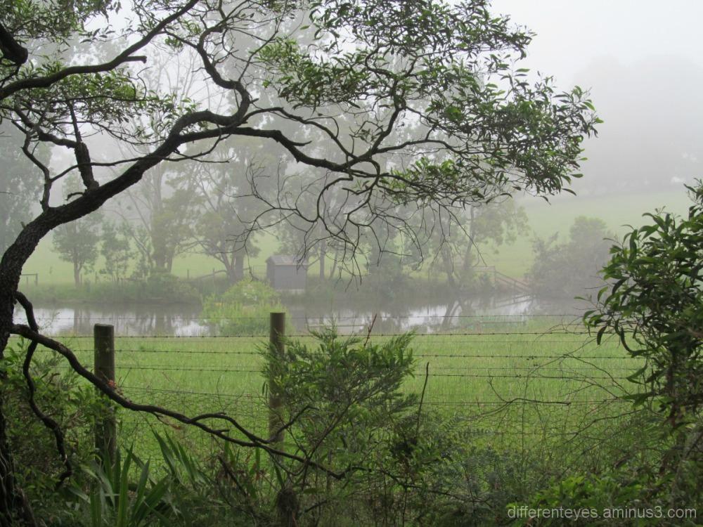 misty summer morning