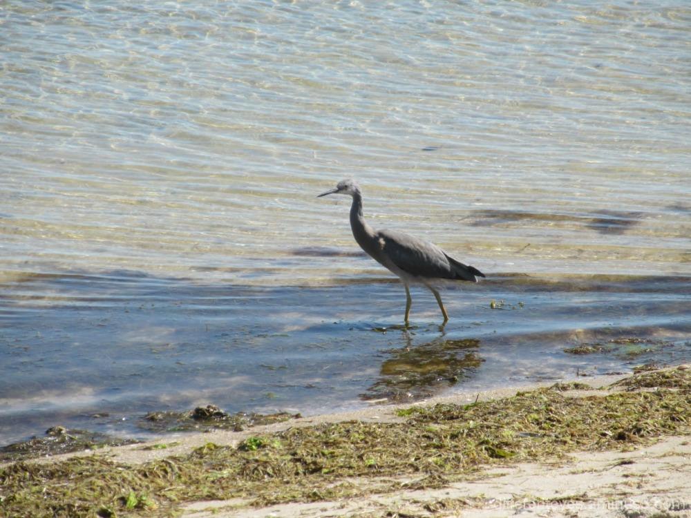 Rosebud beach and a bird