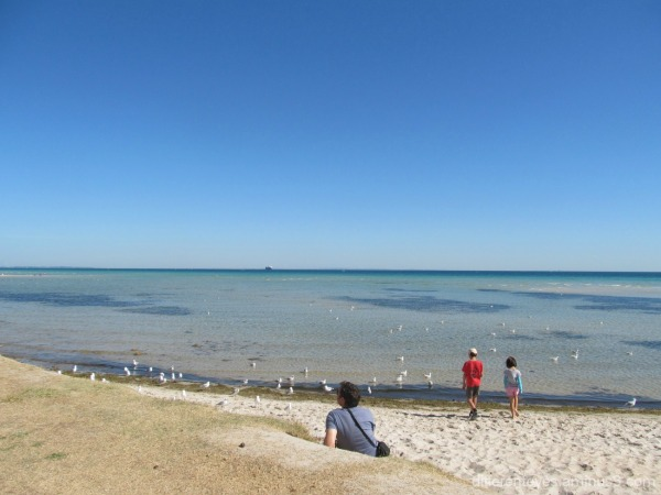 Rosebud beach and people