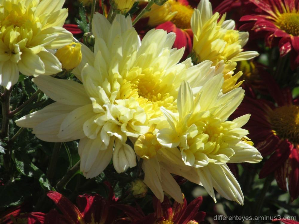 autumn flowers at the Enchanted Maze Garden
