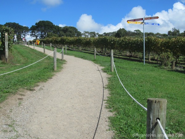Montalto vineyards walkway