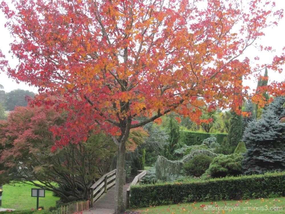 autumn view of the Enchanted Maze Garden