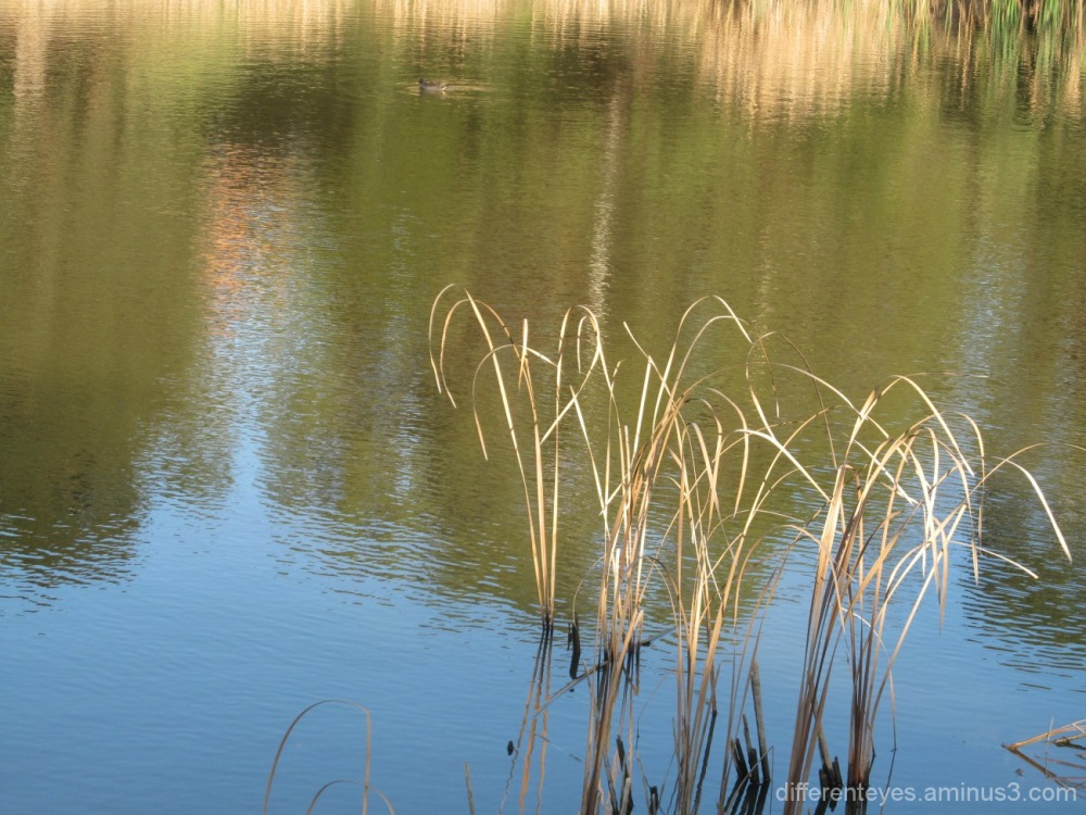 reflections in Dromana wetlands