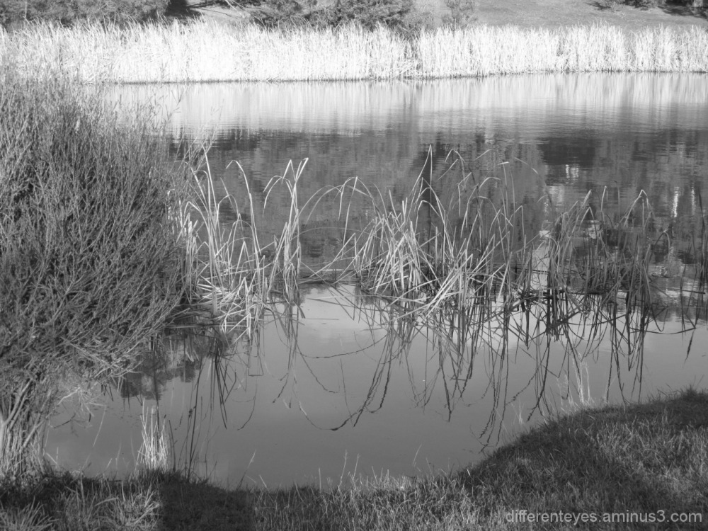 monochrome of Hillview Community Reserve wetlands