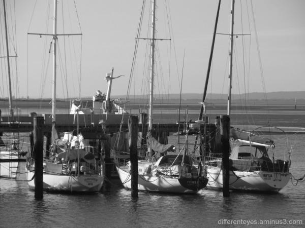 monochrome boats at Hastings marina
