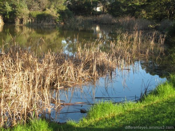 Hillview Community Reserve wetlands in winter