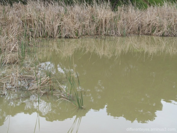 Dromana wetland reflections