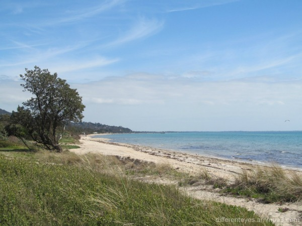 spring view of Safety Beach