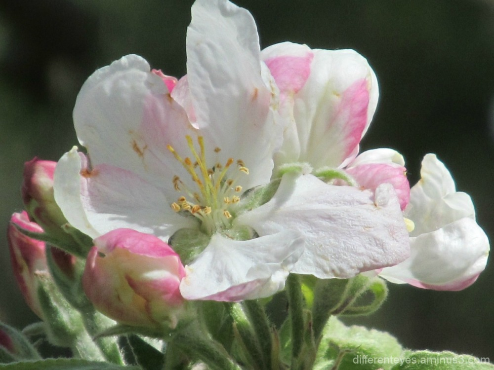 spring blossoms in macro
